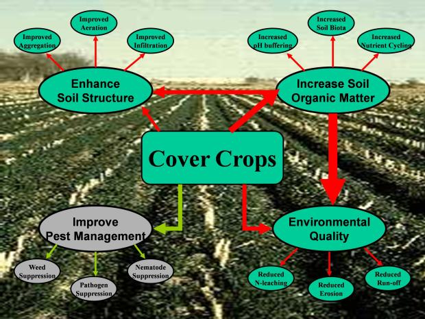 cover crop chart