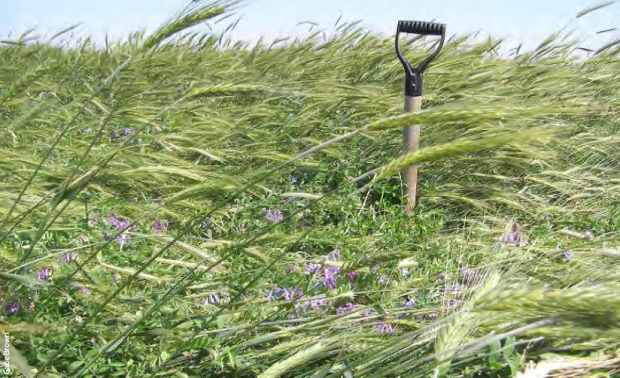 cover crop-shovel