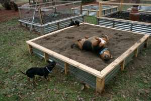 Dogs enjoying your freshly mulched beds